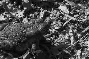 SZ-toad 1